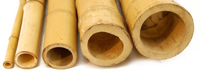 10 canne di bamb da 300cm calibro 60 80mm officina del for Canne di bambu per arredamento